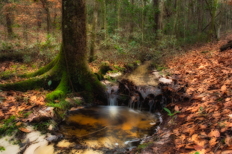 Deep Forest Creek